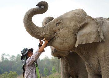 """สบทบทุน """"โครงการร่วมด้วยช่วยช้างฝ่าวิกฤต COVID-19"""""""